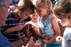 Snake Animal Encounter