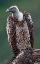 Africa Bird 1