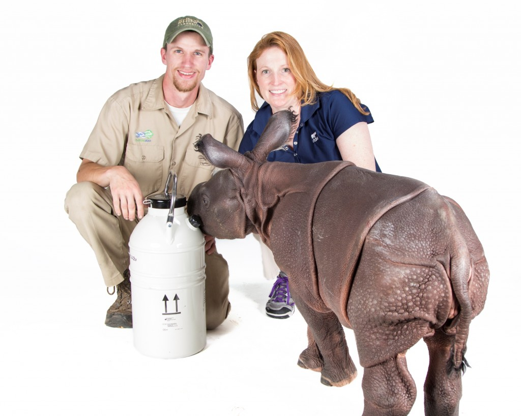 Rhino calf Monica,  Lead  Rhino Keeper Joe Hauser, CREW Reproductive Physiologist Dr. Monica Stoops