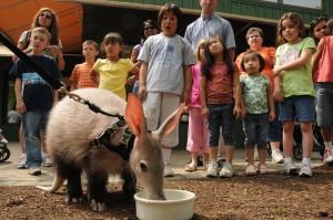 Aardvark encounter Cincinnati Zoo