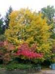 mediumtree