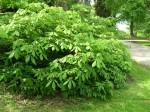 shrubsover