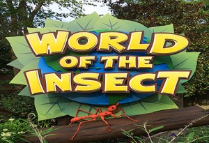 World of the Insect
