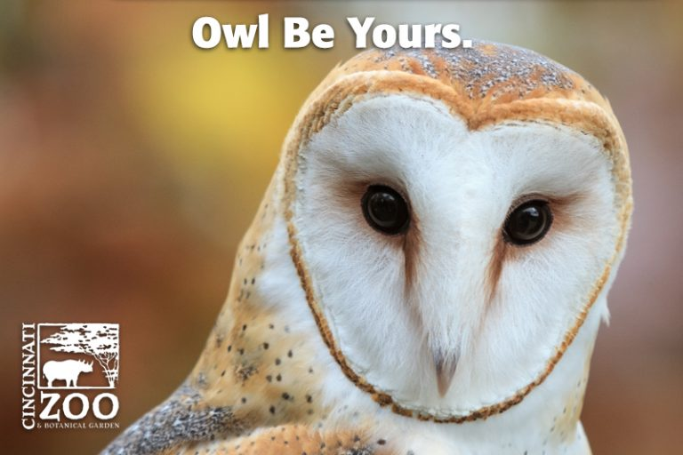 owlbeyours
