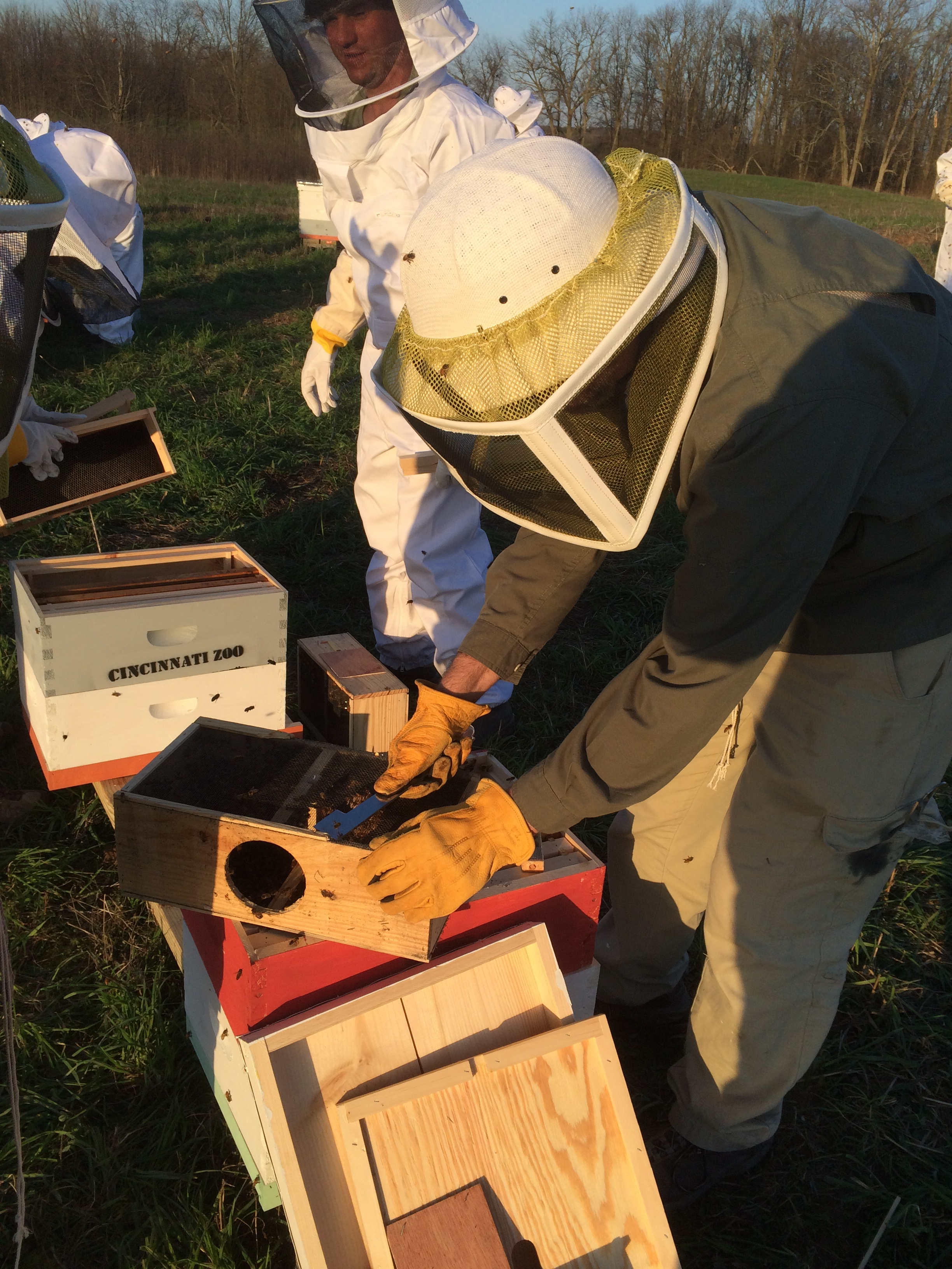 Zoo staff setting up bee hives at Bowyer Farm