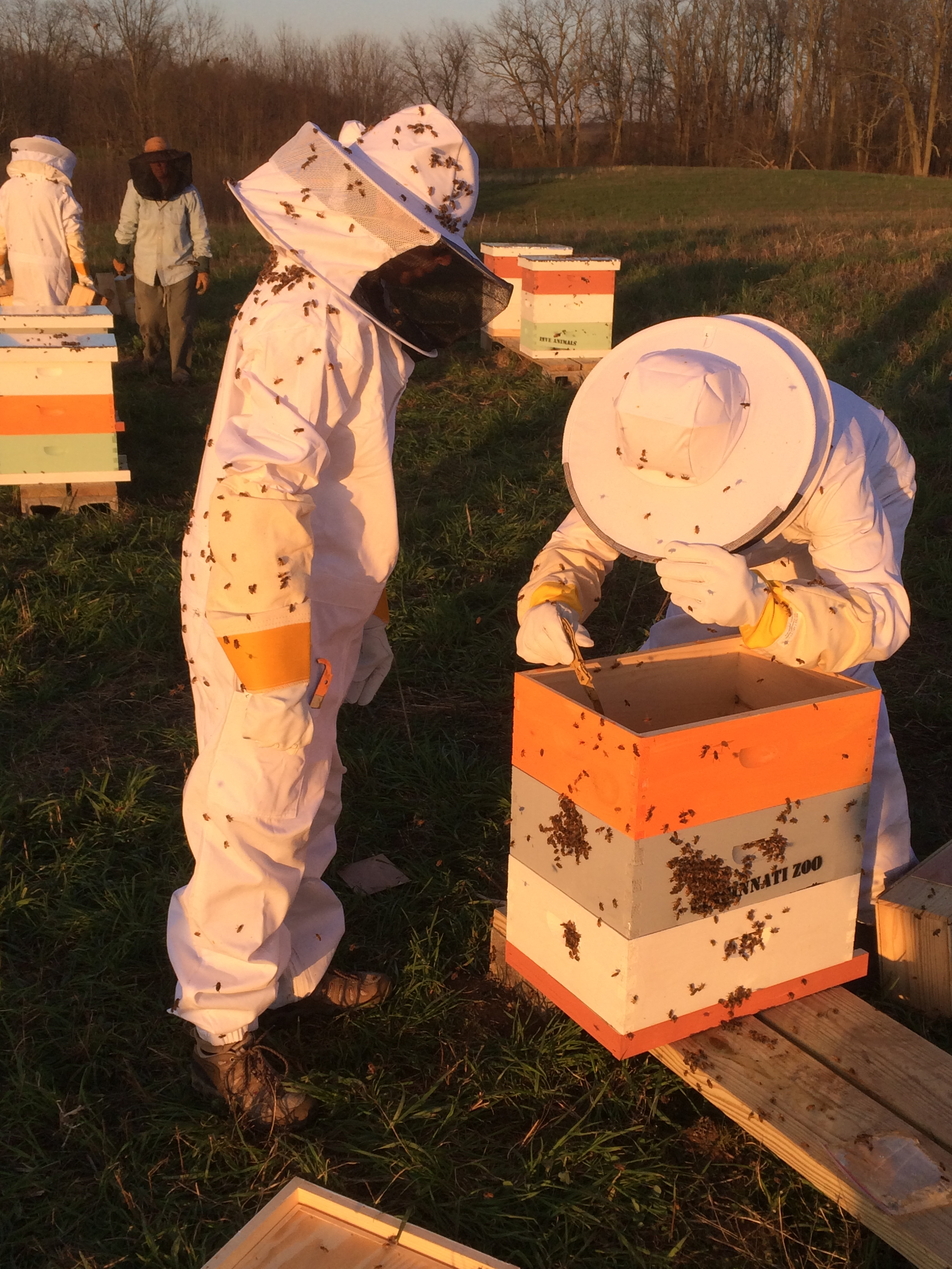 Pollen Nation volunteers working on hives at Bowyer Farm