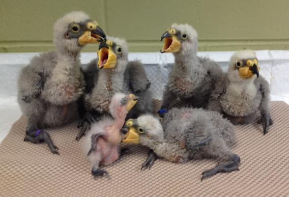 Cincinnati Zoo Flies Away With A Plume Award Cincinnati