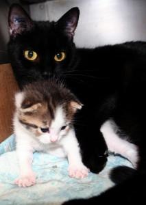 Ebony and Vito