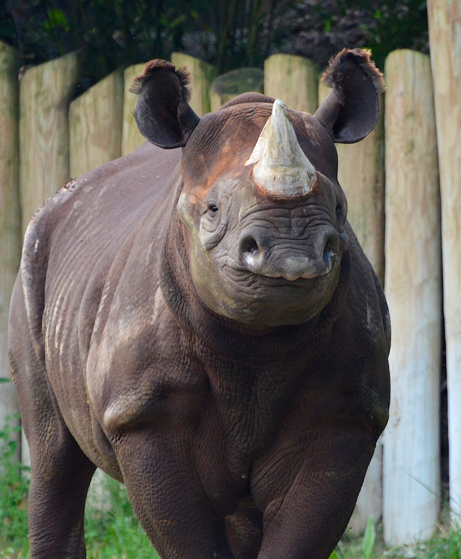 Rhino Reserve Cincinnati Zoo Amp Botanical Garden