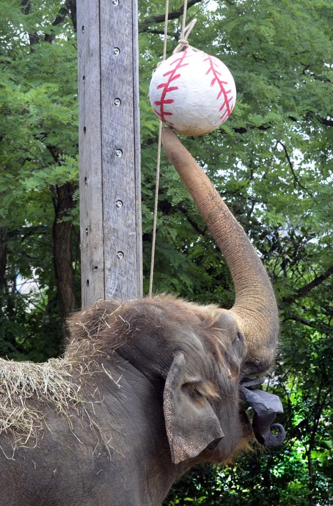 elephant_pinata
