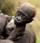 2015-11-05 Zoo Elle Mona Gladys 1546