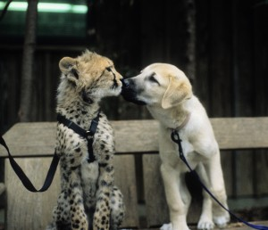 Cheetah Cub and Dog Puppy
