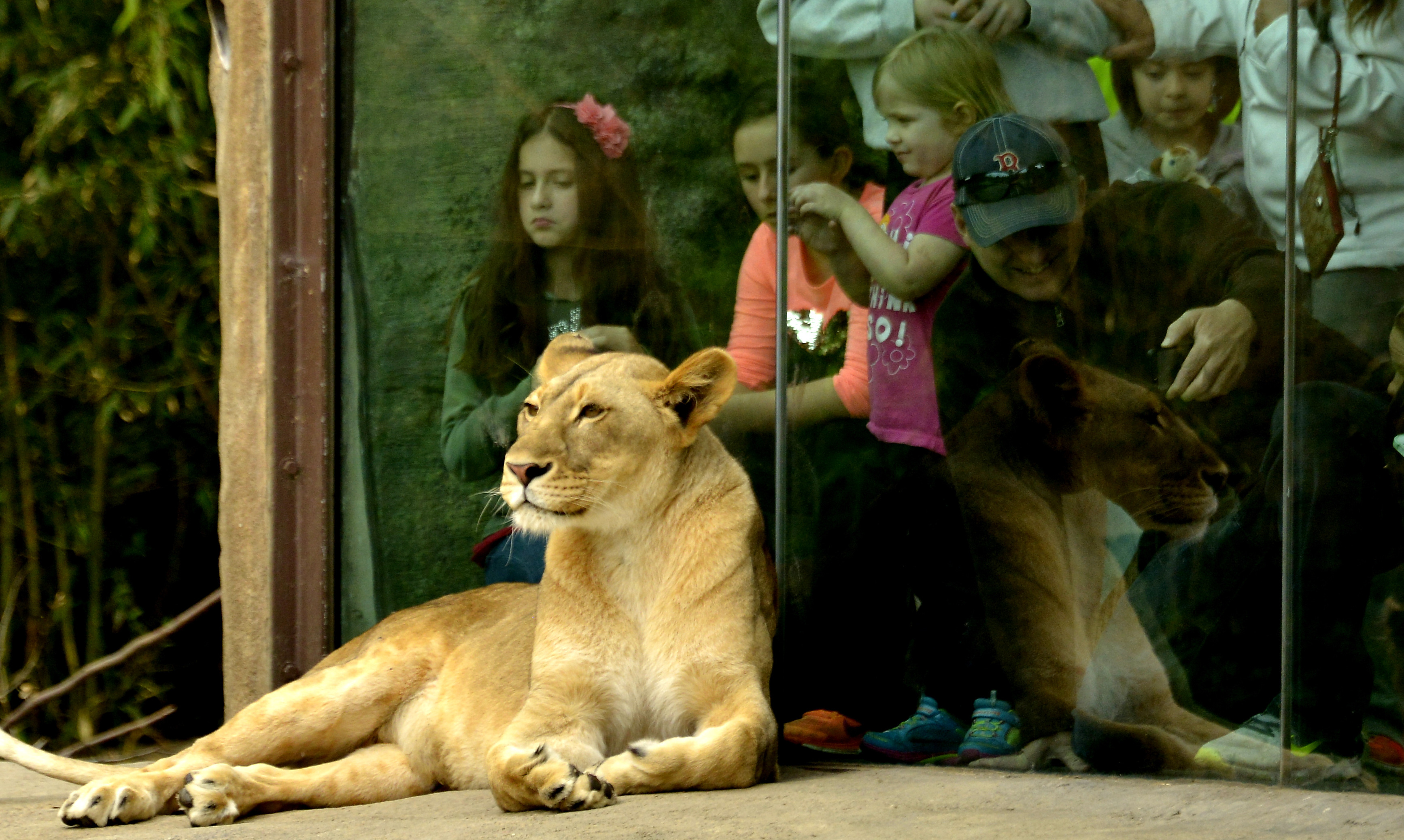 Shopping & Dining – The Cincinnati Zoo & Botanical Garden