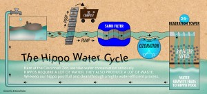 hippo-infographic-web