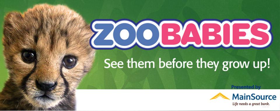 zoobabies copy