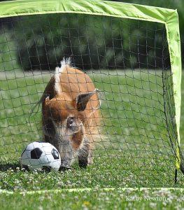 bacon soccer
