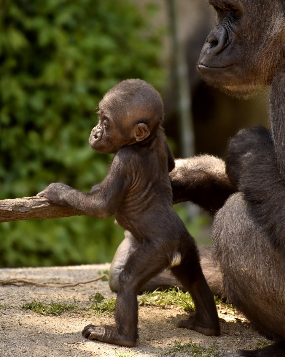 Recycle Your Cell Phone - Cincinnati Zoo & Botanical Garden