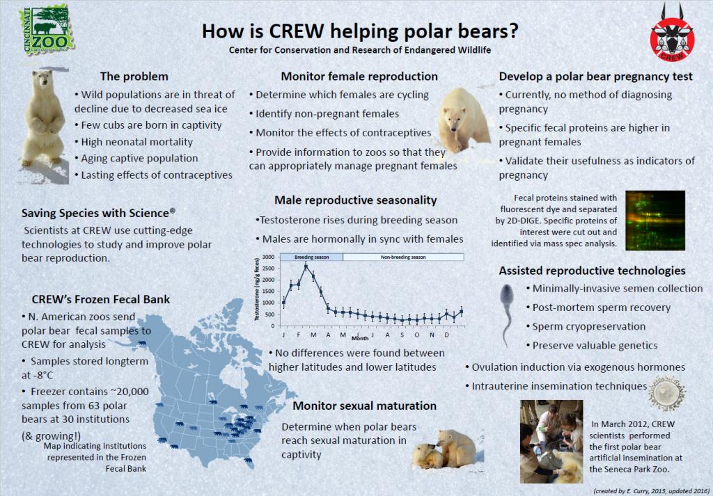 polar-bear-crew-helping