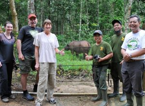 4 1/2-year-old Andatu, nephew of Harapan, happily roaming in his forest area at the Sumatran Rhino Sanctuary. Global team Sumatran Rhino includes 2 CREW scientists, a vet from Australia & SRS vet and staff.
