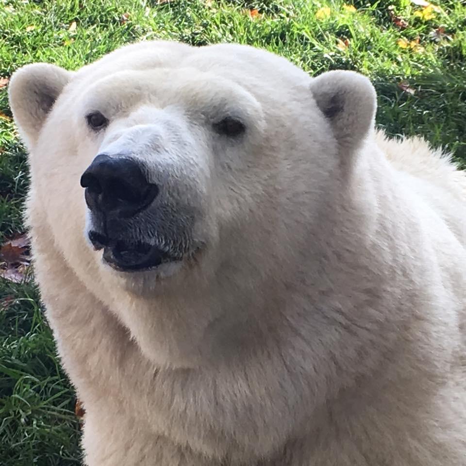 Build A Bear Cincinnati Oh