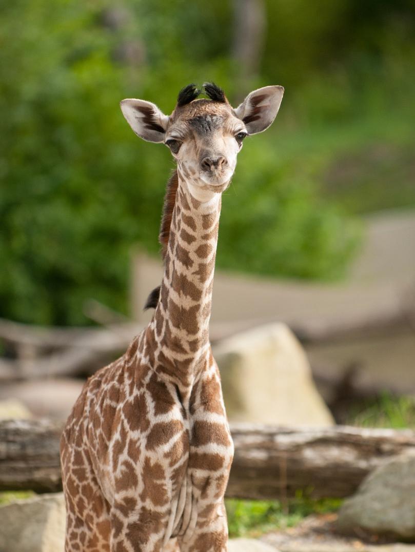 Zoo Babies The Cincinnati Zoo Amp Botanical Garden
