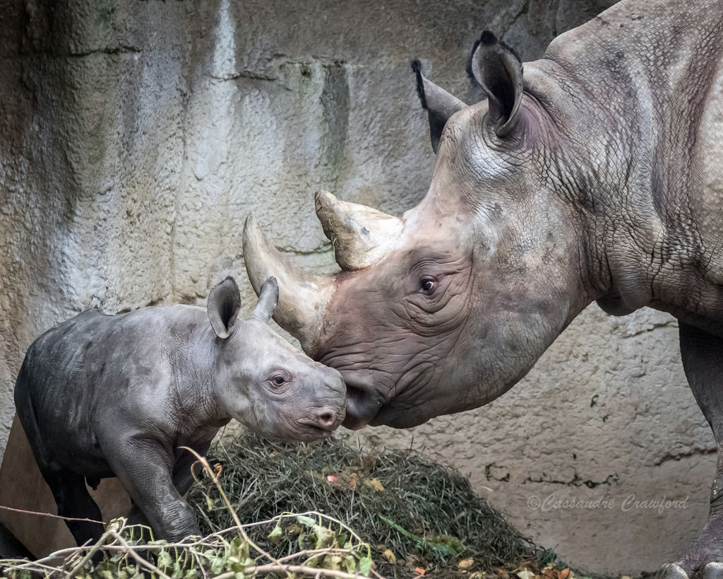 bowling for rhinos off site fundraiser the cincinnati zoo