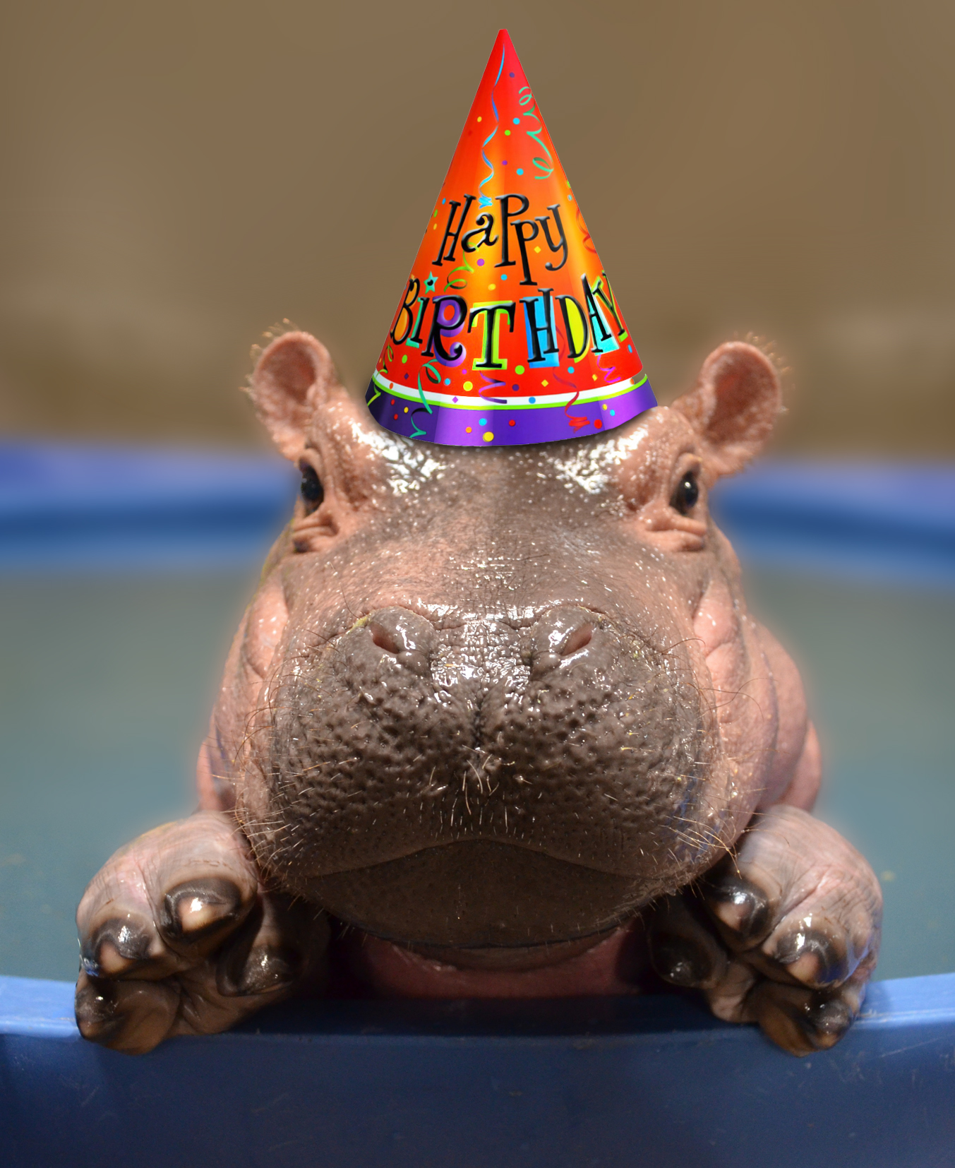 Youve Been With Us Since Day 1 Following The Journey Of Premature Baby Hippo Fiona Now Its Time To Celebrate Our Little Turns One On Jan 24