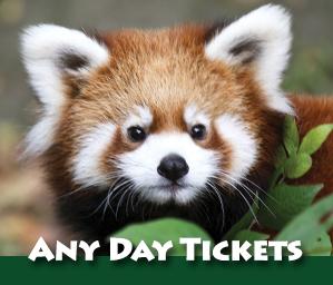 london zoo website