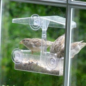 Window feeder (Photo: David Pitkin)