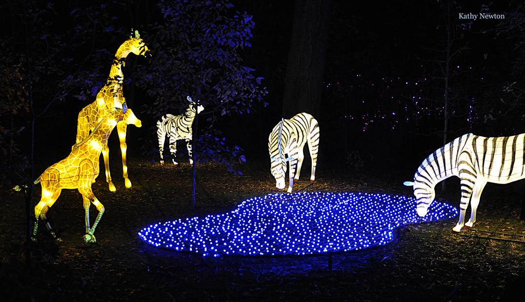 Giraffe and Zebra Lanterns festival of lights
