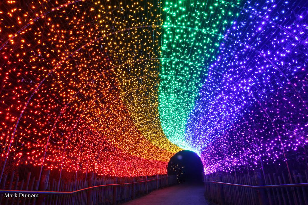 Kroger Hours Christmas Eve 2019 PNC Festival of Lights   Cincinnati Zoo & Botanical Garden®