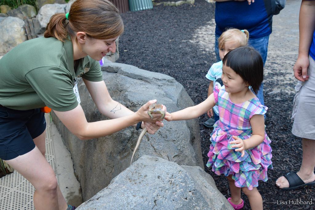 Keeper letting child pet lizard