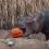 Cincinnati Zoo's HallZOOween Set for October 17, 18, 24, and 25.